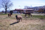 ranc-ruzomberok-5